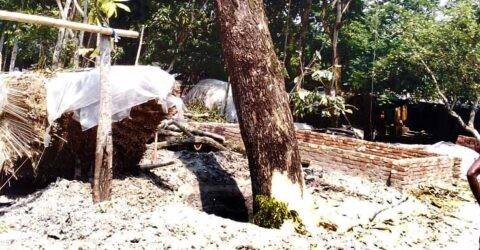 মাগুরাঘোনায় সরকারি গাছ জব্দ