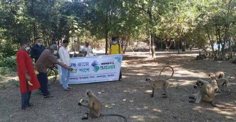 কেশবপুরের ঐতিহ্য বিরল প্রজাতির ক্ষুধার্ত হনুমানের পাশে 'শুভসংঘ'
