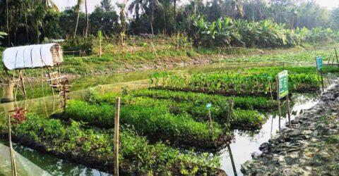 ভাসমান বেডই এখন কেশবপুরে রাজবংশী পাড়ার কৃষক-কৃষাণীদের নতুন স্বপ্ন