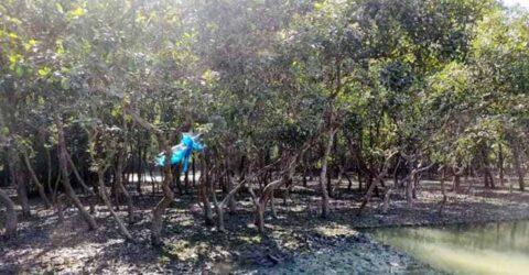 পাইকগাছায় শিবসার চরভরাটি জমিতে প্রাকৃতিকভাবে গড়ে ওঠা বনাঞ্চল