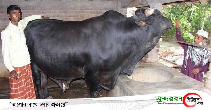 কেশবপুরে ১৫ লাখ টাকায় বিক্রি হবে 'হিরো আলম'
