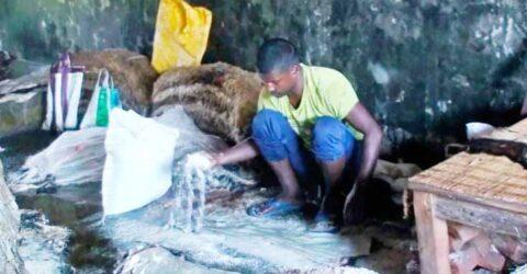 সরকার নির্ধারিত দামে কিনছে না ট্যানারি মালিকরা, বিপাকে সাতক্ষীরার চামড়া ব্যবসায়ীরা